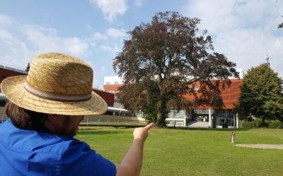 Bram: Mooiste boom van Tilburg