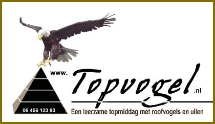 Topvogel Diessen